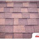 Preventing Algae Infestation on Asphalt Shingle Roofs